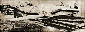 Tay Whale at John Woods yard 1884