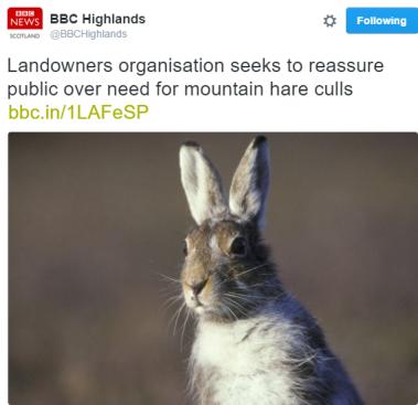 bbc hare
