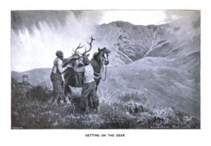 Deer stalking 3