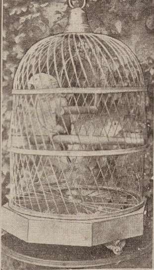 Polly Walker parrot 1929 at Cragievar