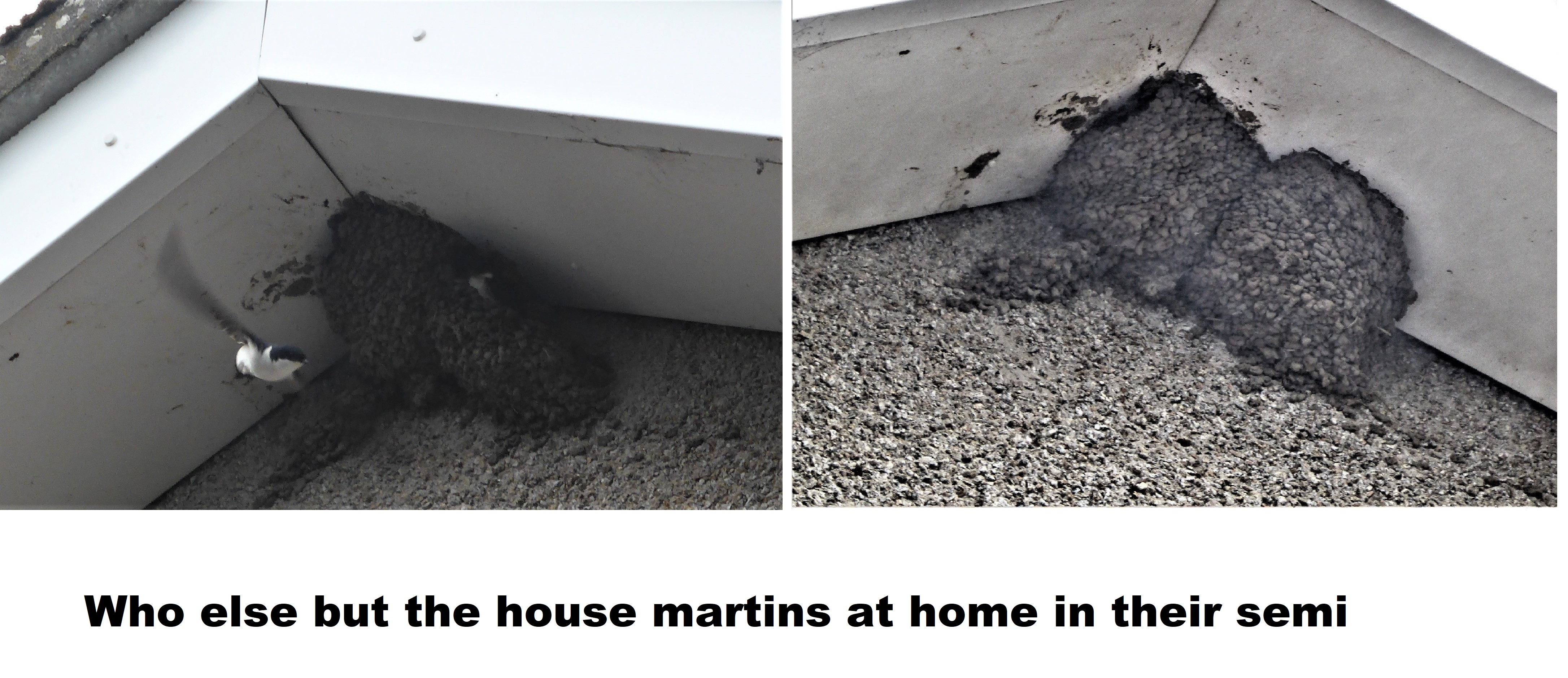 martins 14