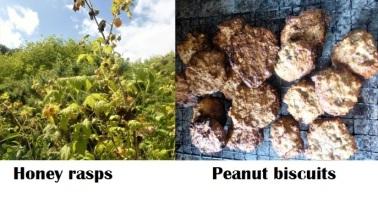 honey rasps and peanut bisc
